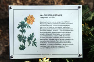 Detail of The Immigrant Garden - Herbarium of ancient and recent introductions to the Saari Manor